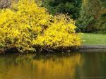 Autumn in the Gardens