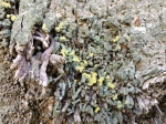 Close Up lichens